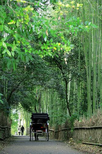 Passing through the bamboos