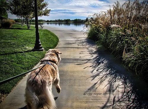 walkin' my dog