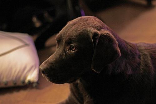Dog Filou