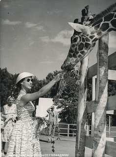Princess feeds a giraffe