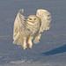 Remarkable Bird Shots